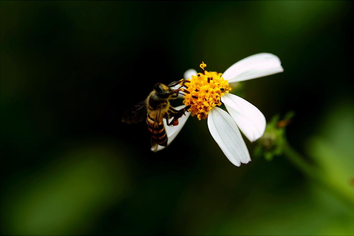 Lo spray anti zanzare BEE-FRIENDLY