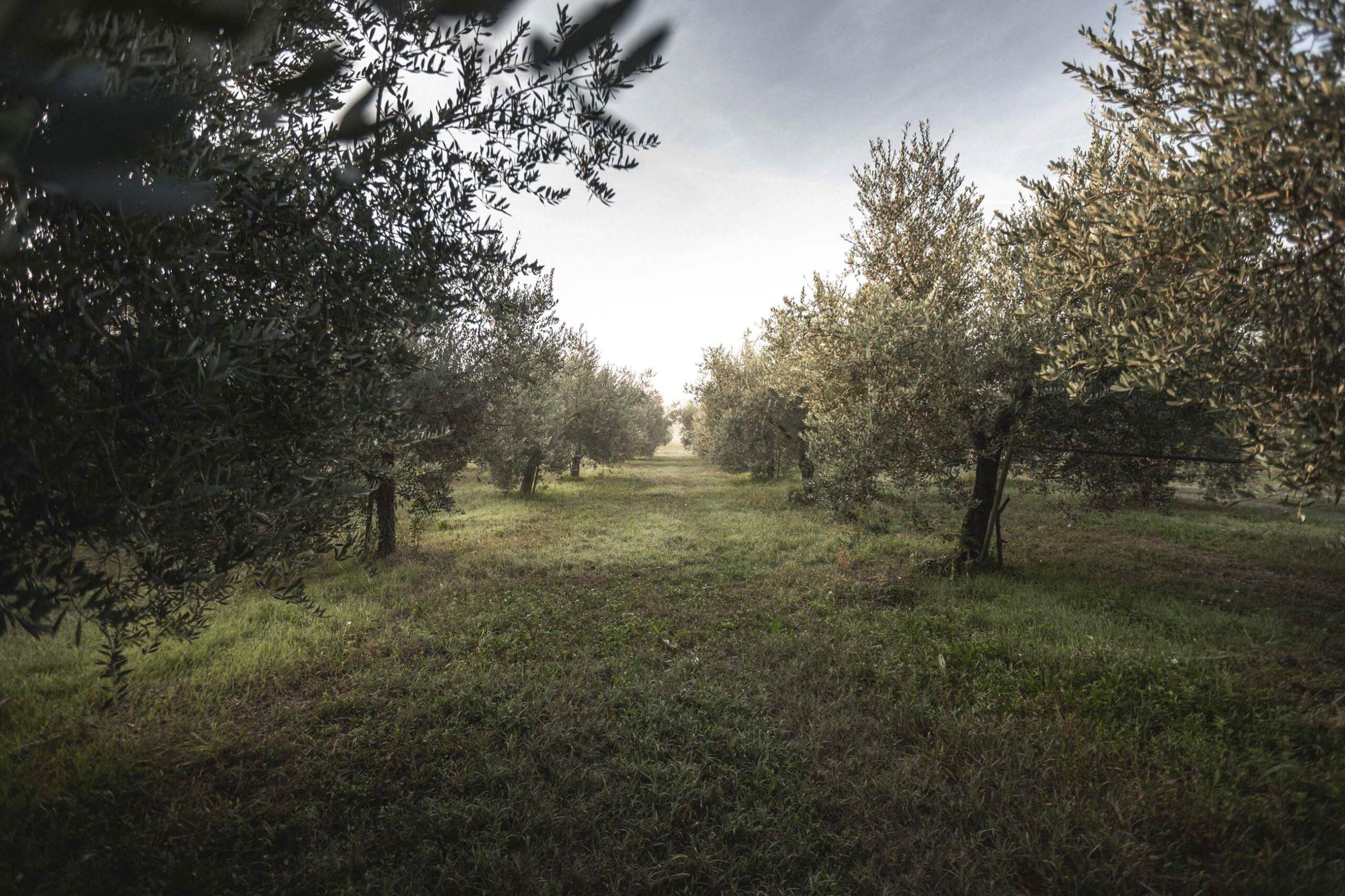 La sostenibilità nell'oleocultura: intervista a Peter Pan